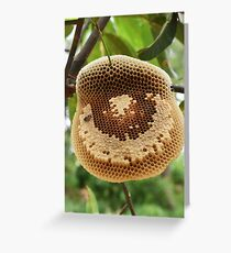 Bees on honeycomb Greeting Card