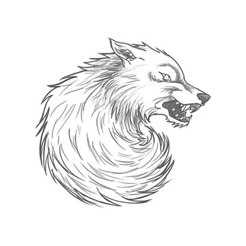 House Stark Wolf Graphic Drawing (Game of Thrones) by jamieroach