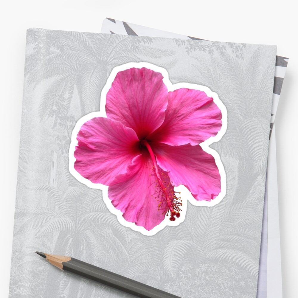Pink Hawaiian Flower Stickers By Sarah Sams Redbubble