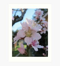 Spring Peach Blossoms Art Print