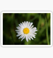 Spring bloom Sticker