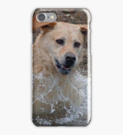 Bouncer The Labrador Leap of faith iPhone Case/Skin