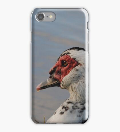 Bird-looking out into the sun iPhone Case/Skin