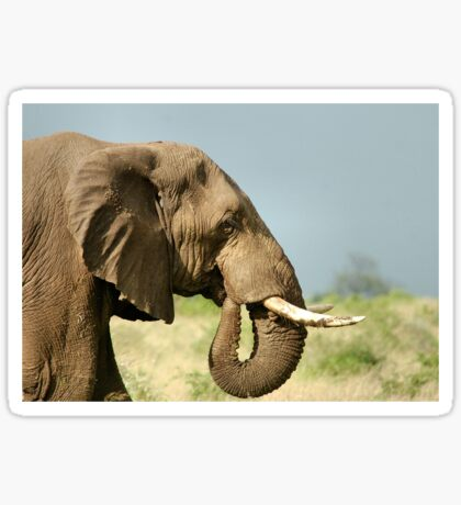THE AFRICAN ELEPHANT IN PROFILE – Loxodonta Africana - AFRIKA OLIFANT Sticker