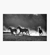 HORSE SILHOUETTES IN BLACK AND WHITE Photographic Print