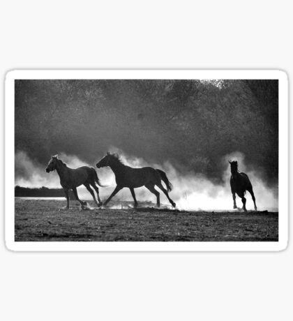 HORSE SILHOUETTES IN BLACK AND WHITE Sticker