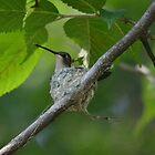 Mama Hummingbird by Kate Farkas