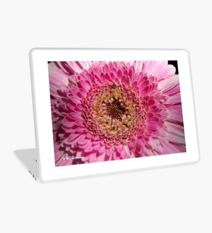 ALL IN PINK, UP CLOSE - GERBERA Laptop Skin