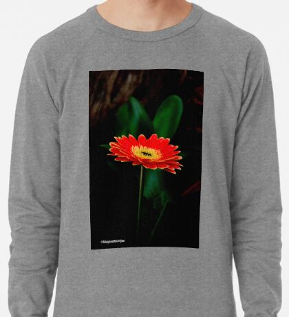 IN THE SHADE - The Barberton Daisy - Gerbera jamesonii  Lightweight Sweatshirt