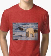 Polar Bear on the Tundra, Churchill, Canada  Tri-blend T-Shirt