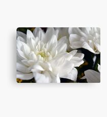 White flowers macro, natural background. Canvas Print