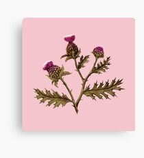 Thistle, Rust on Pink  Canvas Print