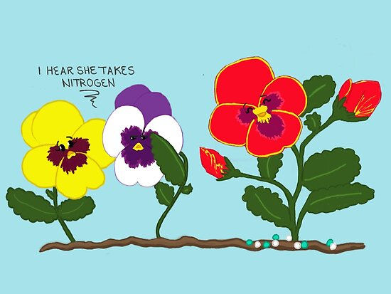 Pansy Politics by Van-Awesome