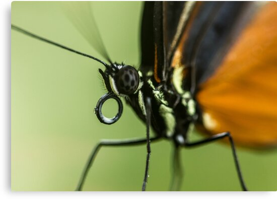 A close up of a butterfly by jamesnphoto