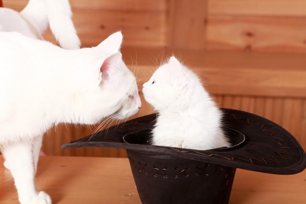 Kitty Kissing Daddy Cat by Dagoth