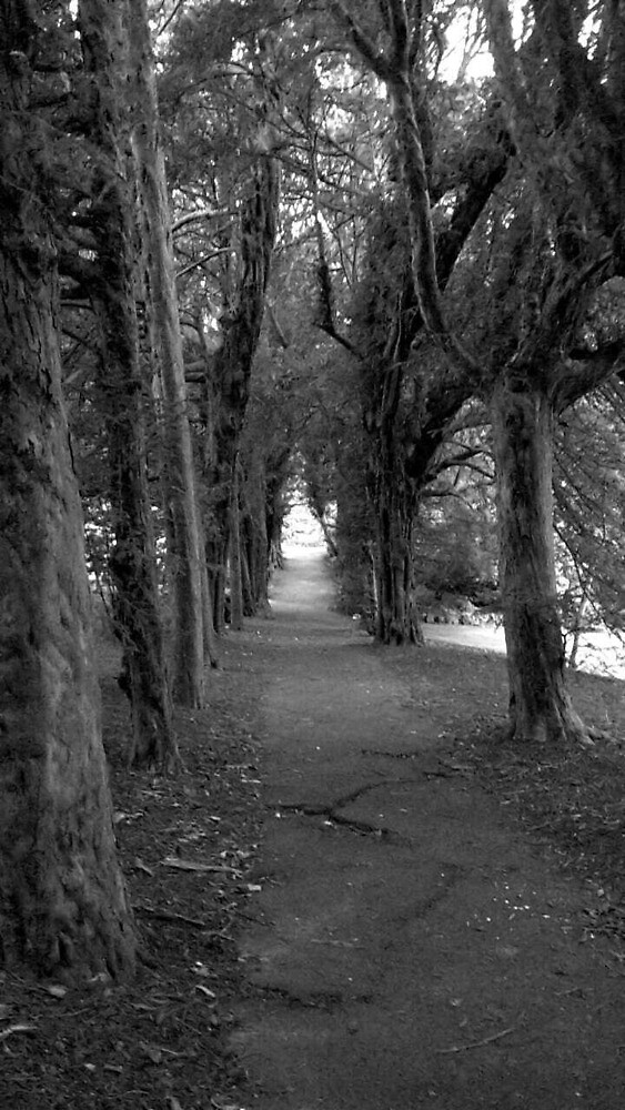 TreesCha by ianlattimore