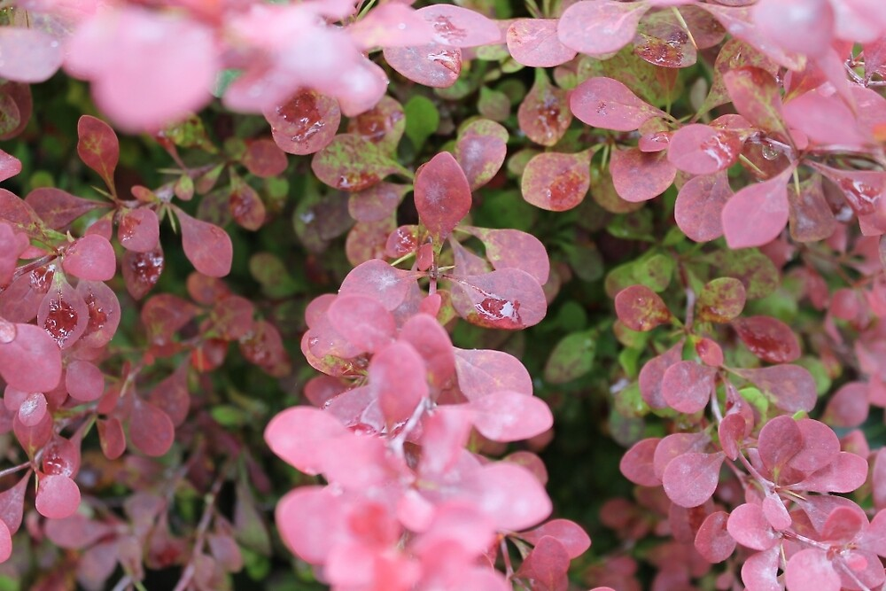 Pink Leavs On Bush by nick5734