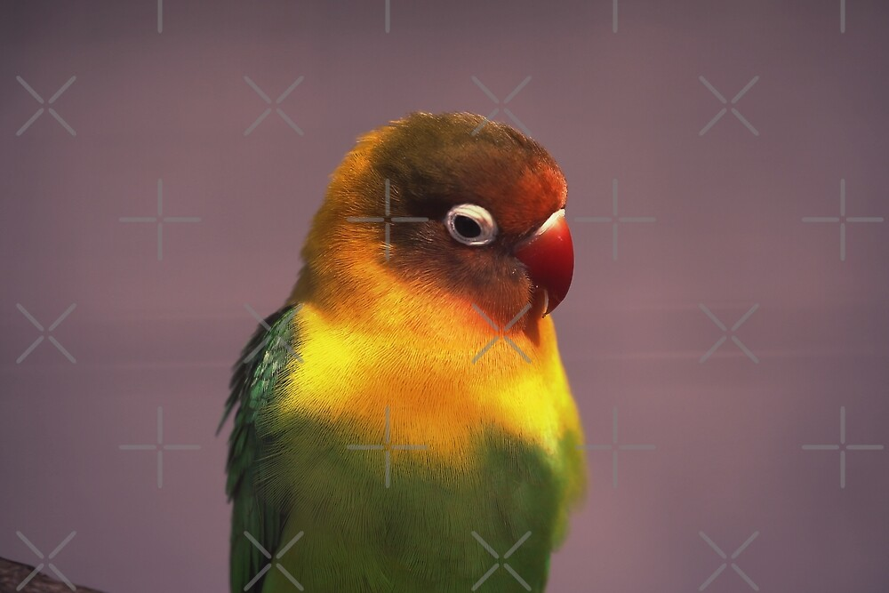colorful bird by hottehue