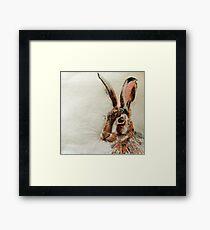 Daniel The Hare Framed Print