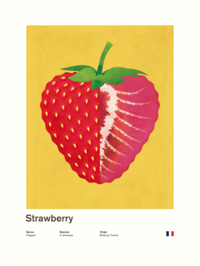 Strawberry (yellow) - Natural History Fruits by RedHillPrints