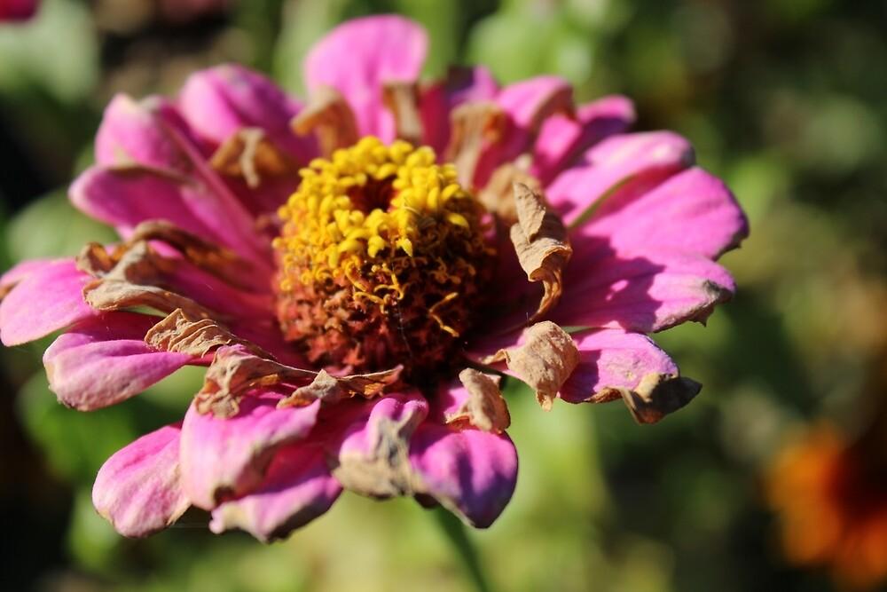 Fleur - Flower by Hellguen