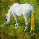 Camargue Horse by jean-louis bouzou