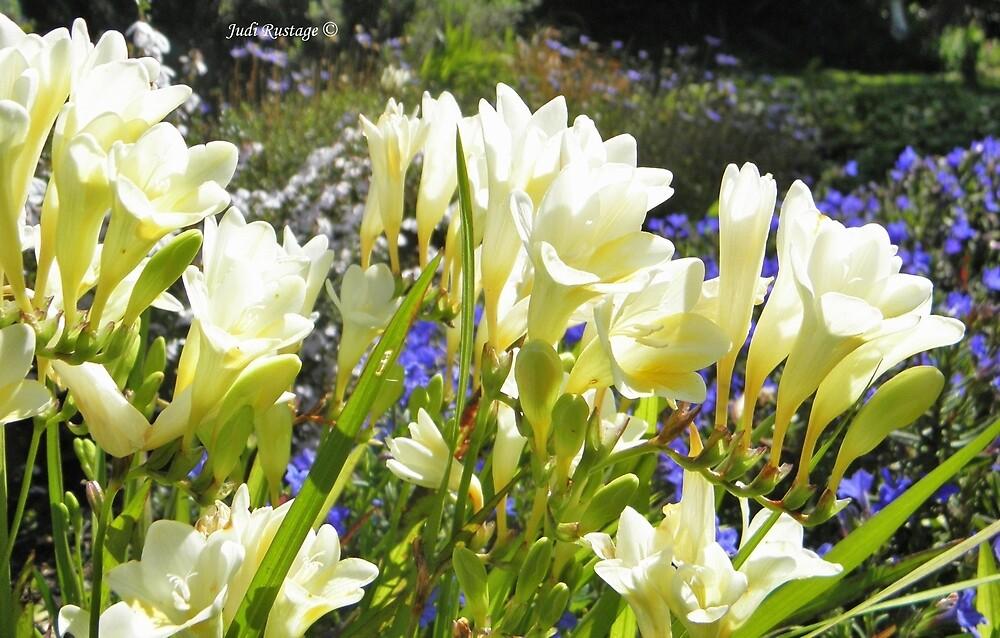 Spring Flowers by Judi Rustage
