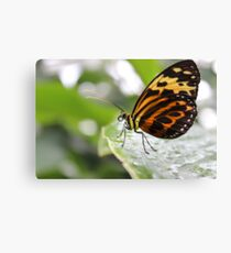 The Best Butterfly Canvas Print