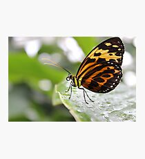 The Best Butterfly Photographic Print