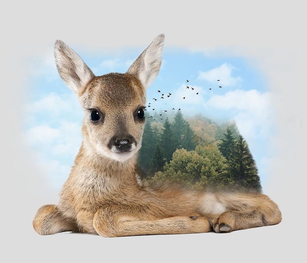 Baby Roe Deer by Sokol Selmani