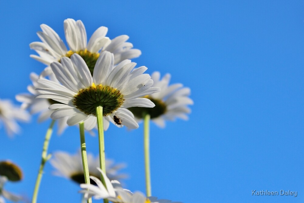 Daisy to the Sky II by Kathleen Daley