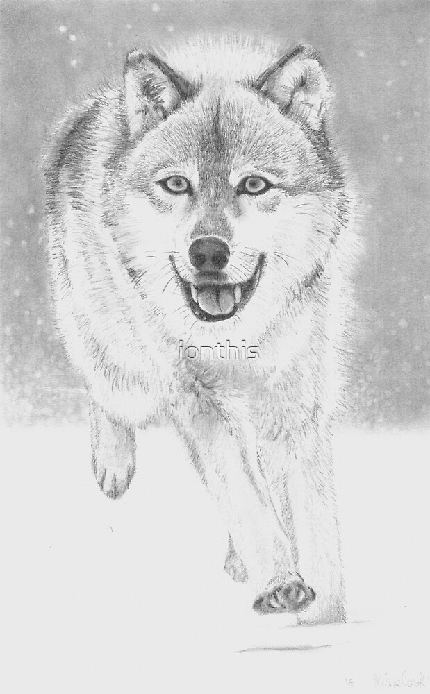 soft snowy day for wolf by ionthis