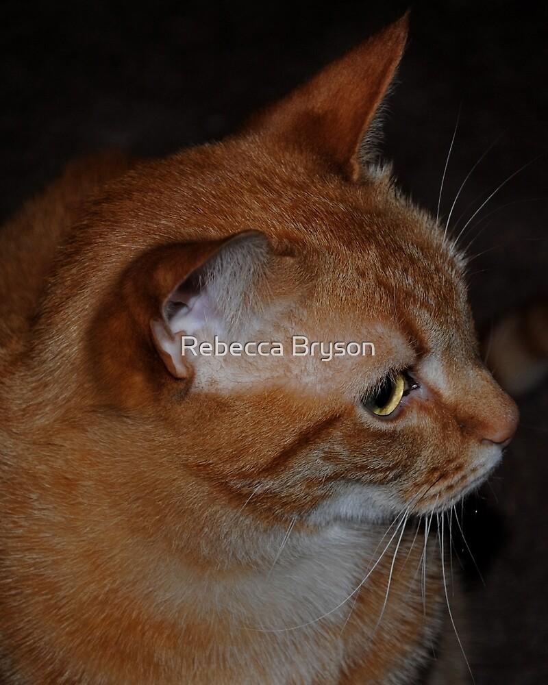 Orange Shorthaired Tabby by Rebecca Bryson