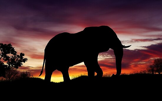 Elephant Africa Safari Sunset Scenery by limitlezz