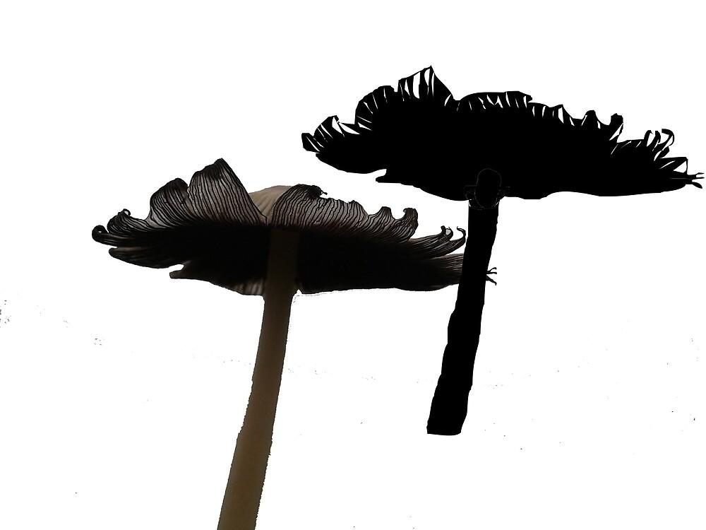 Wild Mushrooms by claysglaze