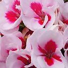 Shades of summer pink by Rainydayphotos