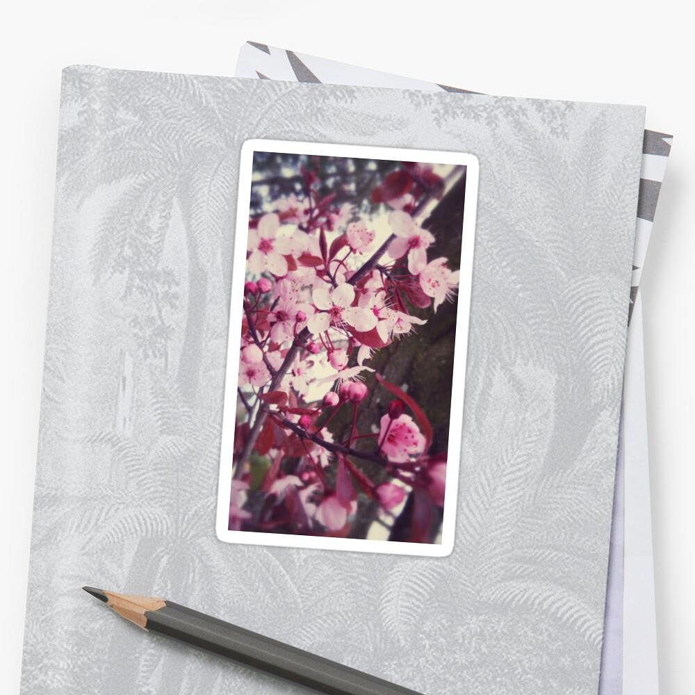 soft cherry blossoms by illustrism