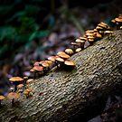 Shroomtree by Andrew Bosman
