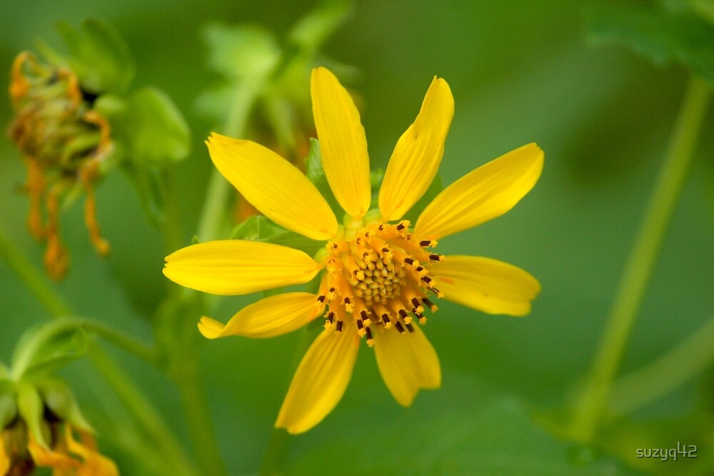 yellow flower by suzyq42