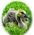 Fuzzy little goose baby by Beth Brightman