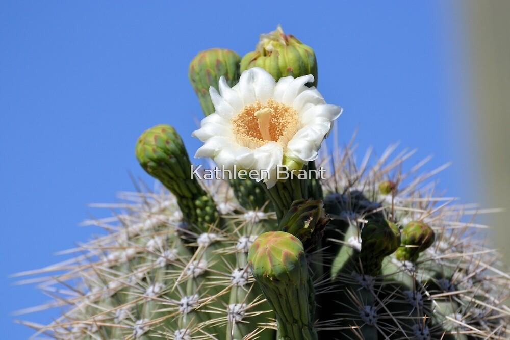 One Open Saguaro Bloom by Kathleen Brant