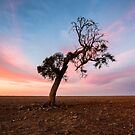 Lonely Tree by David Haworth