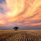 Pilliga Sunset by David Haworth