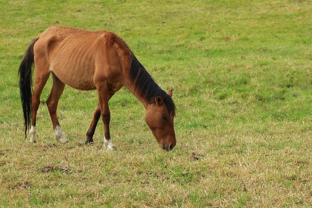 Horse on a Farm by rhamm