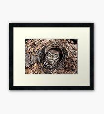 Little owl at home Framed Print