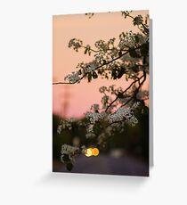 Spring Nights Greeting Card