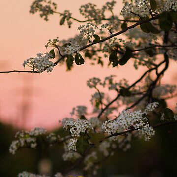 Spring Nights by cmariephoto