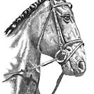 Fine line, hand drawn, Horse in Bridle by Michelle Walker