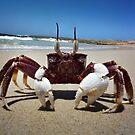 Straddie crab by Matt Mawson