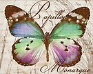 Papillon I by mindydidit